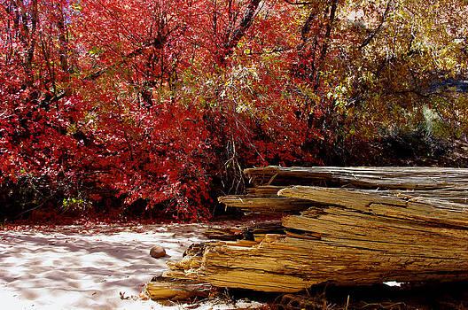 Nature's Contrast by Bill Zielinski