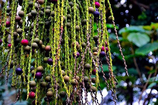 Nature's dreadlocks by Zafer Gurel