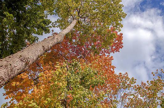 Julie Palencia - Natures Fall Colors