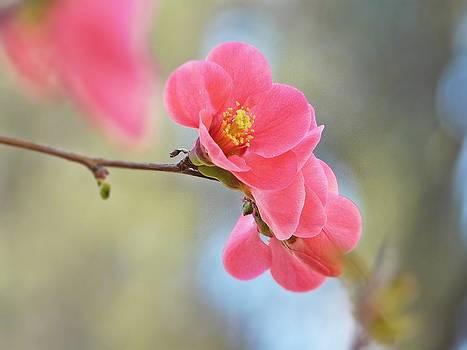 Nature's great awakening by Liudmila Di