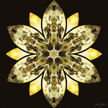 Nature's Mandala 57 by Derek Gedney