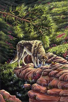 Natures Place by Lori Salisbury