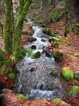 Nature's Rush by Sue McElligott
