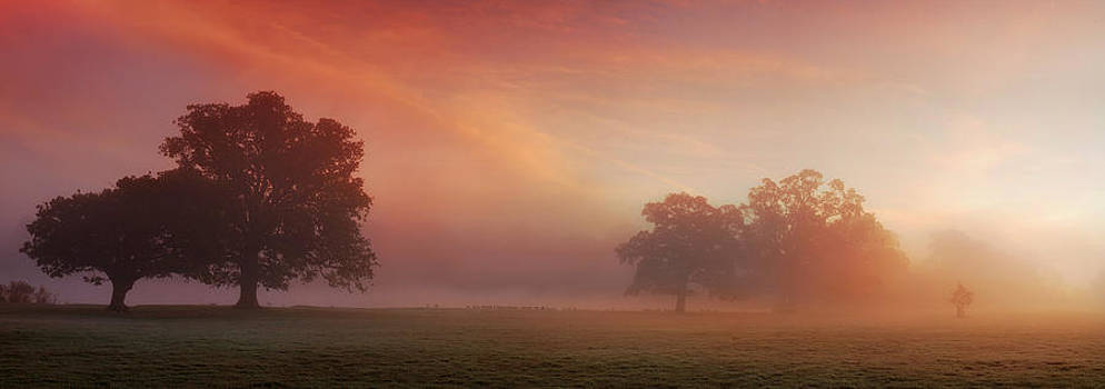 Natures Spectacle by John Chivers
