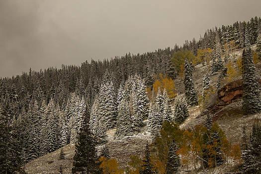 Nature's Spotlight by Dawn Morrow
