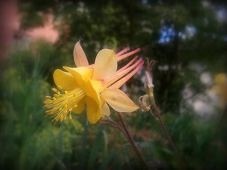 Natures Star by Heather L Wright