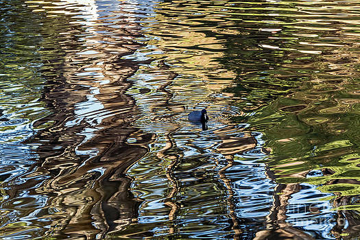 Kate Brown - Nature