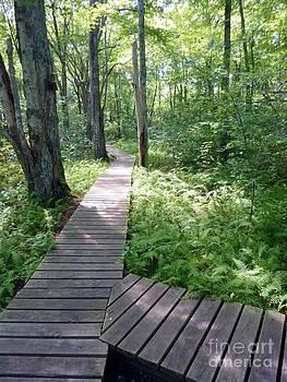 Nature's Walkway by Mary Lou Chmura