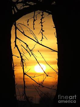Scott B Bennett - Natures Window