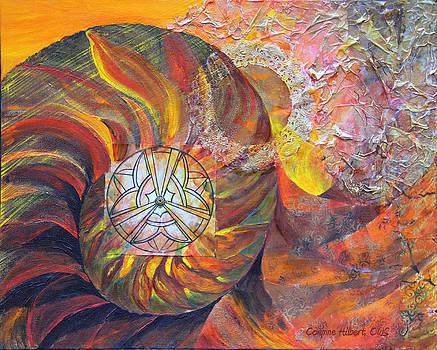 Nautilus by Corynne Hilbert