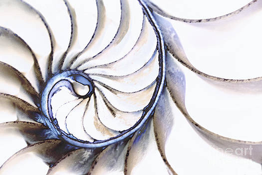 Nautilus Shell by Linda Blair