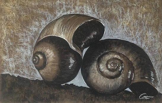 Nautilus Shells in Sepia by Cristel Mol-Dellepoort