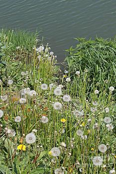 Near pond by Evgeny Pisarev
