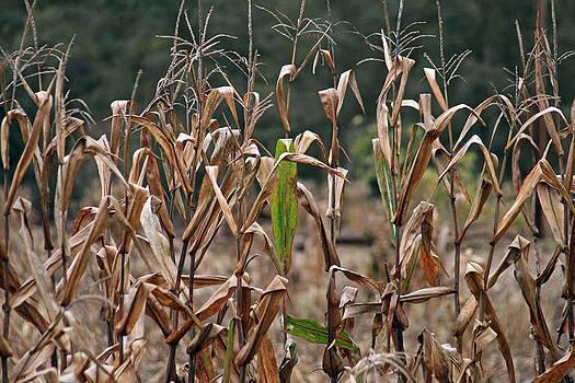 NeBall Corn Field by Frank Morales Jr