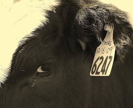 Joy Bradley - Nebraska Beef