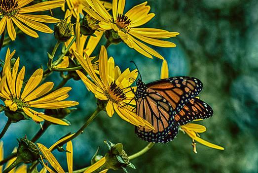 Nectar by Todd Heckert