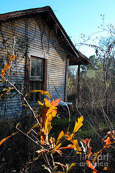 Neglect in Fall by Michelle Burkhardt