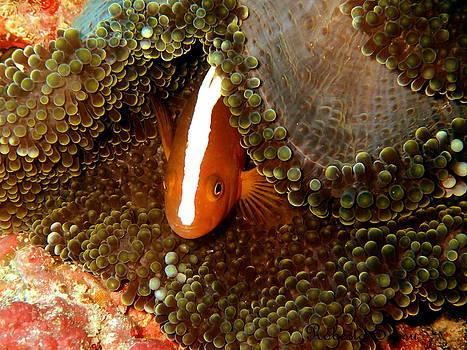 Nemo White Line by Roberta Sassu