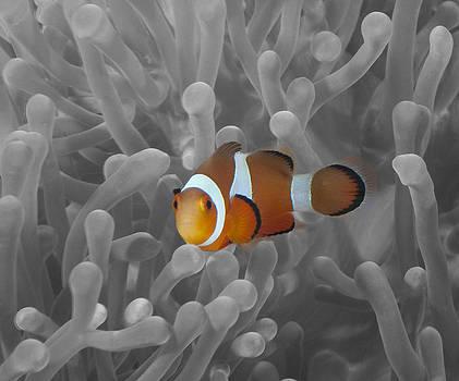 Nemo's Bro by Terry Cosgrave