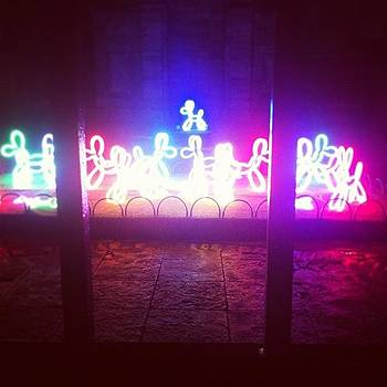 Neon Doges From The Lumiere Festival In by Orla O\'Neill