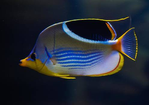 Neon Fish by Chandra Wesson