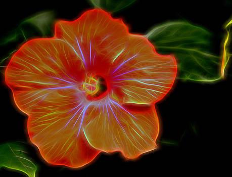 Bonnie Davidson - Neon Hibiscus