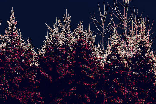 Neon Pines on a stary Night by Sherry Hudson