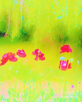 Neon Poppies by Sherry Stone