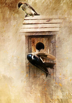 Nest Prepping by Pam  Holdsworth