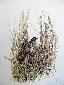 Alfred Ng - nesting sparrow