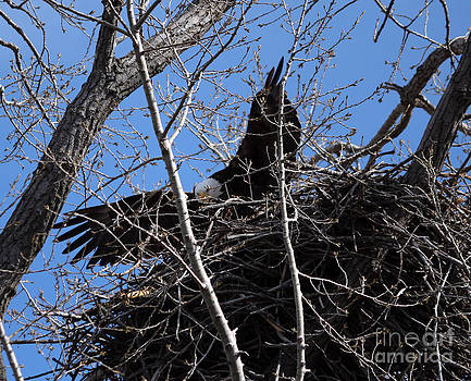 Nesting time by Lori Tordsen