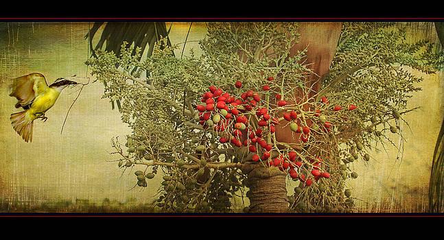 Peggy Collins - Nesting Tropical Bird