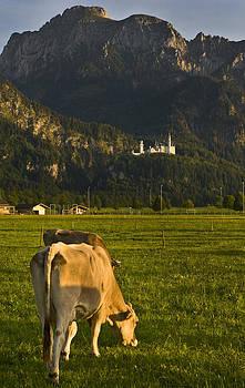 Pam  Elliott - Neuschwanstein Castle with Cows