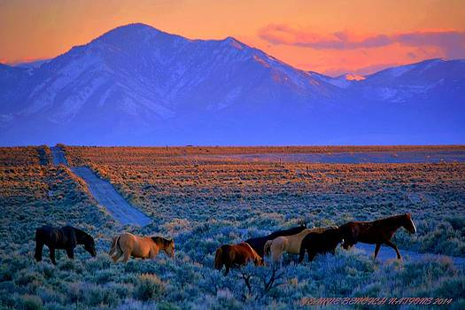 Nevada  by Jeanne  Bencich-Nations