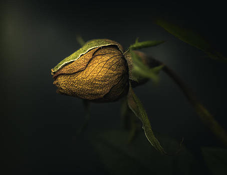 Never Give Up by Paul Barson