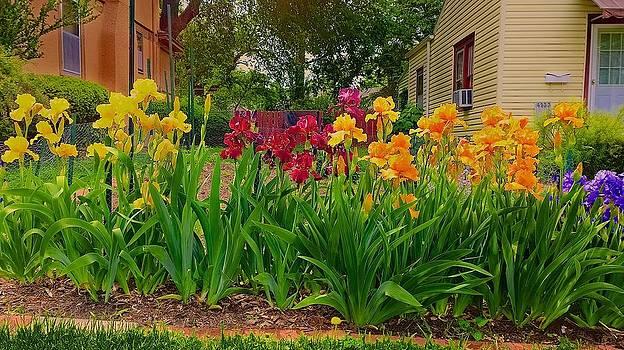 Never seen Orange Iris by Larry Bodinson