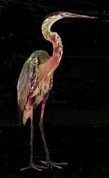 New coat for the Heron by Carol Kinkead