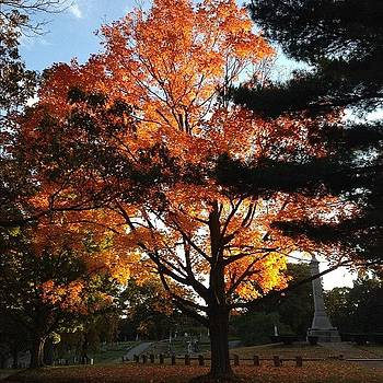 New England #fall #tree #nofilter by Maddie Yardley