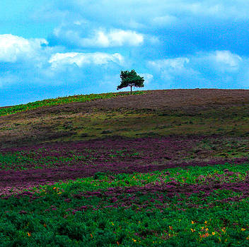 New Forest Plain UK by Yvonne Gallagher