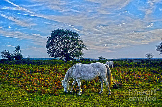 New Forest Ponies Under Sky by Skye Ryan-Evans