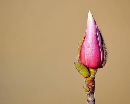 New Growth by AJ  Schibig