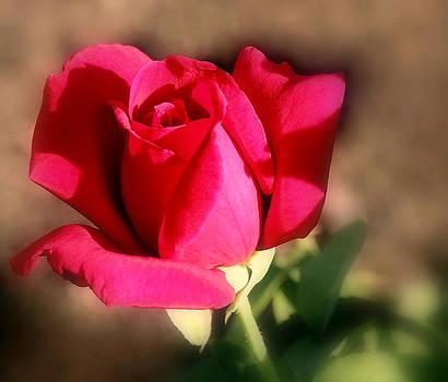 Rosanne Jordan - New Love Rose