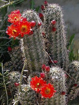 Kurt Van Wagner - New Mexico cactus