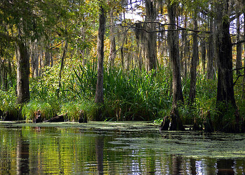 New Orleans Swamp by Heidi Pence