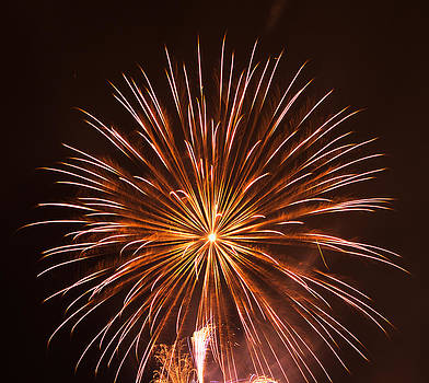 New Year's Firework by Emily Henriques