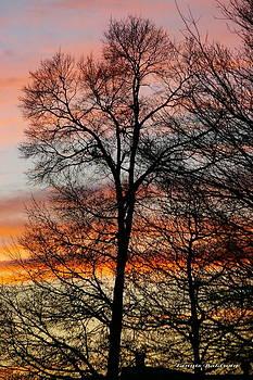 Tannis  Baldwin - New Years Sunset