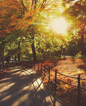 New York Autumn - Sunset - Central Park by Vivienne Gucwa