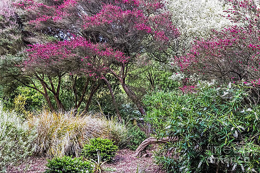 Kate Brown - New Zealand Tea Tree II
