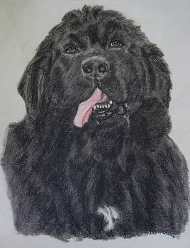 Newfoundland Dog by Joan Pye