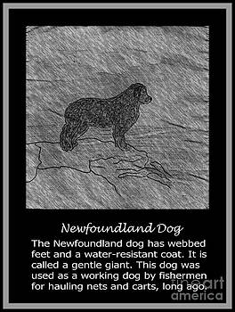 Barbara Griffin - Newfoundland Dog Vintage Sketch